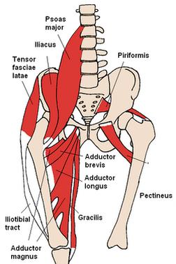 lumbopelvic hip complex