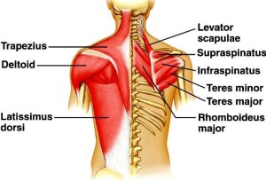 get a thick back, back workout, get stronger, back injury