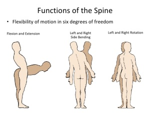 Functions of the Spine